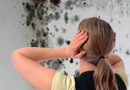 mold-damage